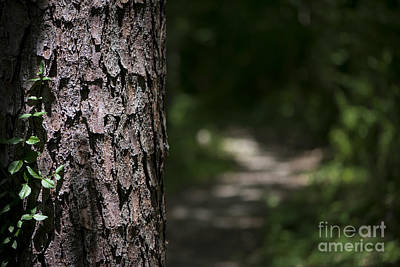 Photograph - Walk In The Woods by Andrea Silies