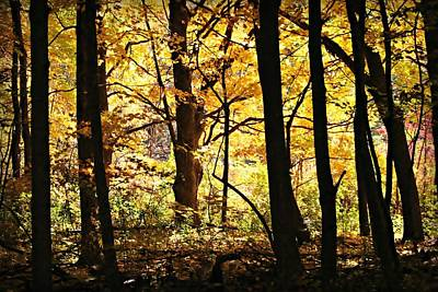 Photograph - Walk In The Woods by Jeanette Fellows