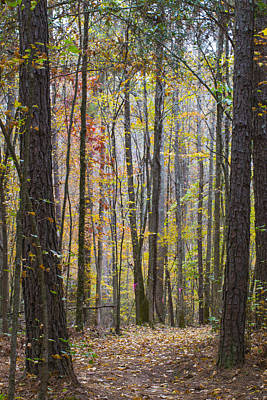 Photograph - Walk In The Woods by Keith May