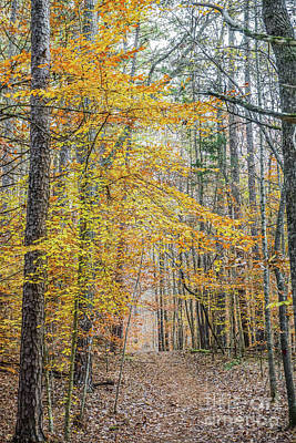 Photograph - Walk In The Woods by Liesl Marelli
