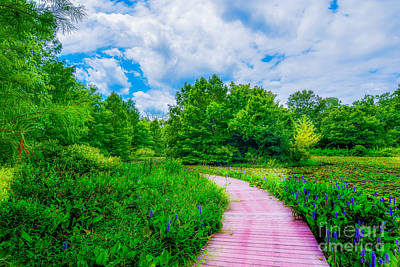 Photograph - Walk Into Beauty Shaw's Nature Reserve Wet Lands by Peggy Franz