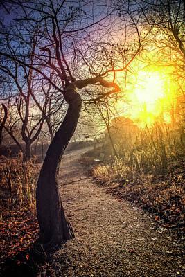 Photograph - Walk Into Sunshine by Debra and Dave Vanderlaan