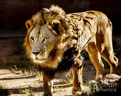 Photograph - Walk On The Wild Side by Jerry Cowart