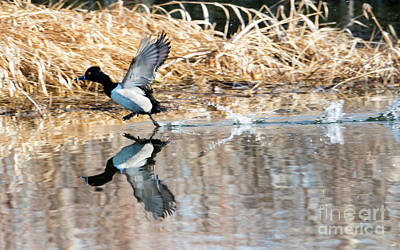 Photograph - Walk On Water by Mike Dawson