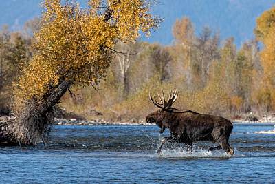 Gros Ventre Photograph - Walk On Water by Sandy Sisti