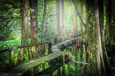 Photograph - Walk Quietly Through The Cypress by Debra and Dave Vanderlaan