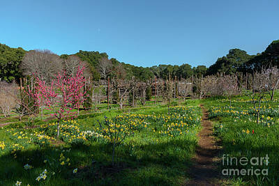 Photograph - Walk Through The Orchard by Glenn Franco Simmons