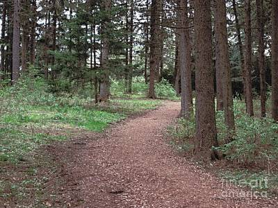 Photograph - Walk Through The Pines by Kathie Chicoine