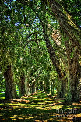 Art Print featuring the photograph Walk With Me Avenue Of Oaks St Simons Island Art by Reid Callaway