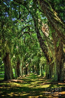 Photograph - Walk With Me Avenue Of Oaks St Simons Island Golf Club Art by Reid Callaway