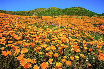 Walker Canyon Wildflowers Art Print