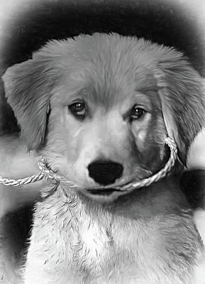 Puppy Photograph - Walkies...pleeease - Vignette by Steve Harrington