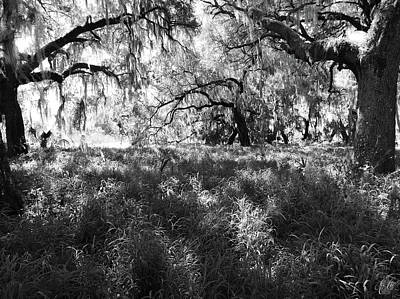 Photograph - Walking Among Giants, No. 4 by Elie Wolf