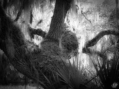 Photograph - Walking Among Giants, No. 5 by Elie Wolf