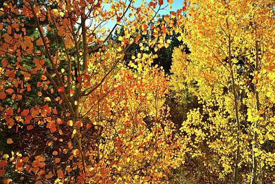 Photograph - Walking Among The Aspens At Dillon Reservoir by Ray Mathis