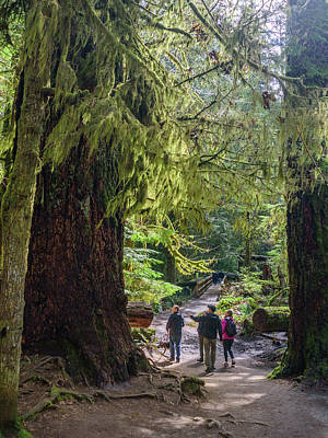 Photograph - Walking At Cathedral Grove by Keith Boone