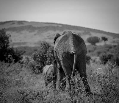 Photograph - Walking Away by Adrian O Brien