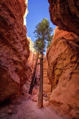 Photograph - Walking Between The Hoodoos In Bryce by Carolyn Derstine