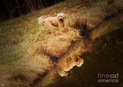 Photograph - Walking By The Pond by Sandra Clark