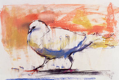 Colorful Drawing - Walking Dove by Mark Adlington