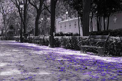 Photograph - Walking In A Violet Dream by Andrea Mazzocchetti