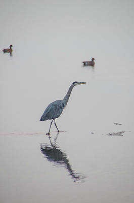 Photograph - Walking In Calm Waters by Marilyn Wilson