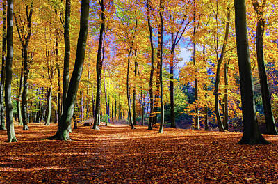Photograph - Walking In The Golden Woods by Dmytro Korol
