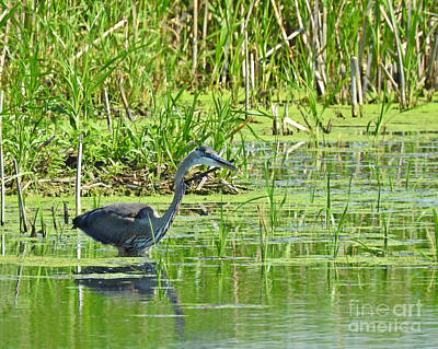 Photograph - Walking In The Shallows by Kathy M Krause