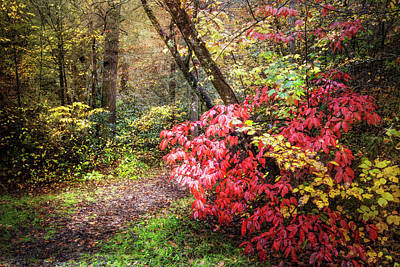 Photograph - Walking In The Woods In Autumn by Debra and Dave Vanderlaan