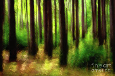 Walking In The Woods Art Print