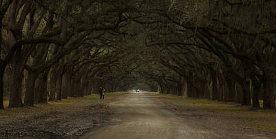 Photograph - Walking In Wormsloe  by Stacy Sikes