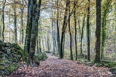 Wilderness Photograph - Walking Into Jordan Beech Wood, Catalonia by Marc Garrido