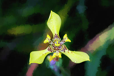 Photograph - Walking Iris Neomarica Gracillis Painted 002 by Rich Franco