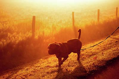 Photograph - Walking On Sunny Field by Jenny Rainbow