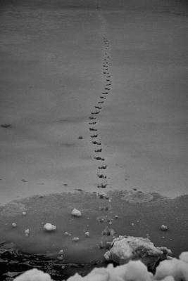 Photograph - Walking On Thin Ice by Jason Coward