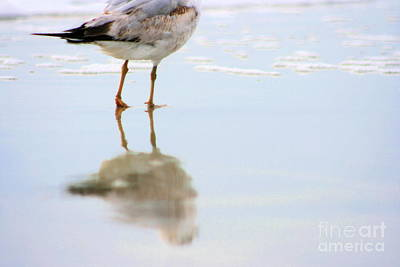 Photograph - Land Sea And Sky Series Ring Billed Gull Walking Along The Beach by Angela Rath