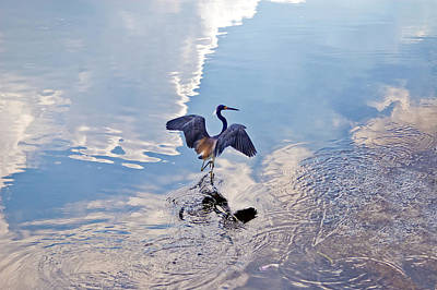 Walking On Water Print by Carolyn Marshall