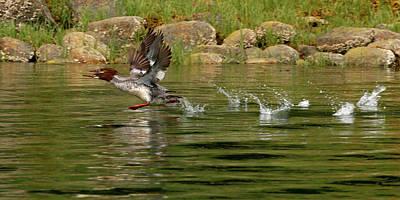 Photograph - Walking On Water by Inge Riis McDonald