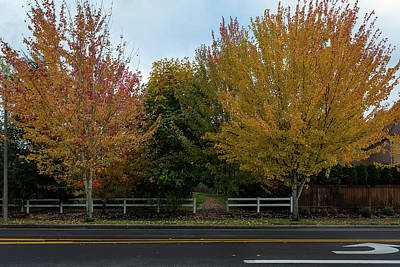 Photograph - Walking Path To Neighborhood Park In Fall Season by David Gn