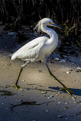 Great White Heron Photograph - Walking Tall by Marvin Spates