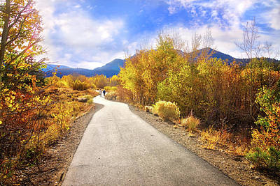 Photograph - Walking The Aspen Trail by Lynn Bauer