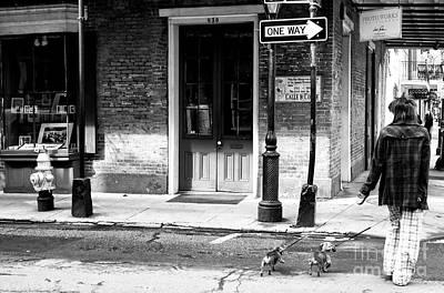 Photograph - Walking The Dachshunds by John Rizzuto