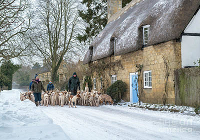 Photograph - Walking The Hounds by Tim Gainey