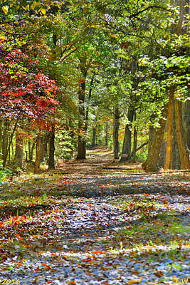 Photograph - Walking Through Autumn by Lisa Wooten