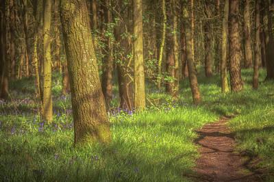 Bluebells Wall Art - Photograph - Walking Through The Bluebell Wood by Chris Fletcher