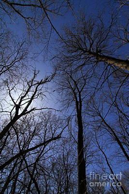 Photograph - Walking To The Light # 3 by Rick Rauzi