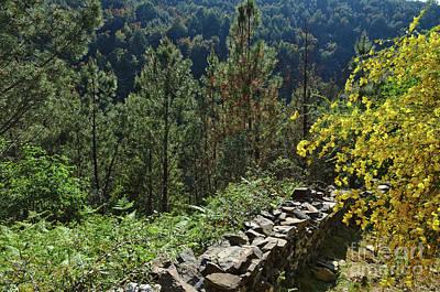 Photograph - Walking Trails In Serra Da Lousa by Angelo DeVal
