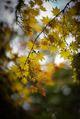 Japanese Maple Tree Photograph - Walks In The Autumn Garden by Mike Reid