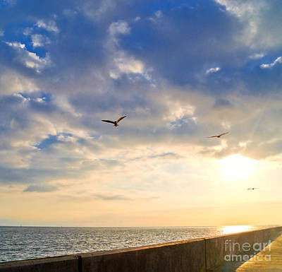 Flying Gull Photograph - Walkway Along Oceanfront by David Buffington