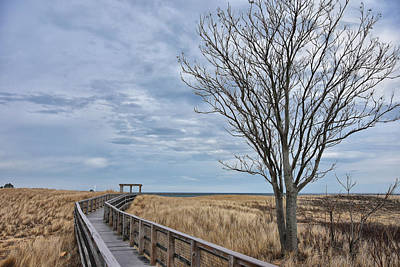 Photograph - Walkway At Plum Island by Tricia Marchlik